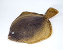 Enlarge - Artificial Flounder, 02041533