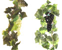 Enlarge - Liana composition with grapes, 0207280